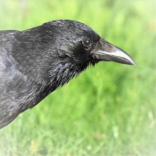 Vögel füttern (1978)